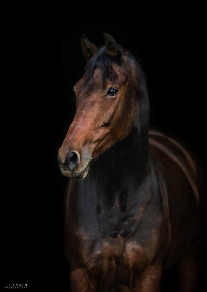 Hest til salg Matina Zack